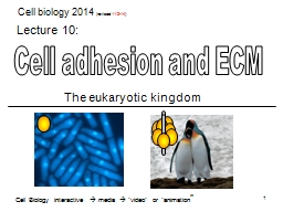Cell adhesion and ECM