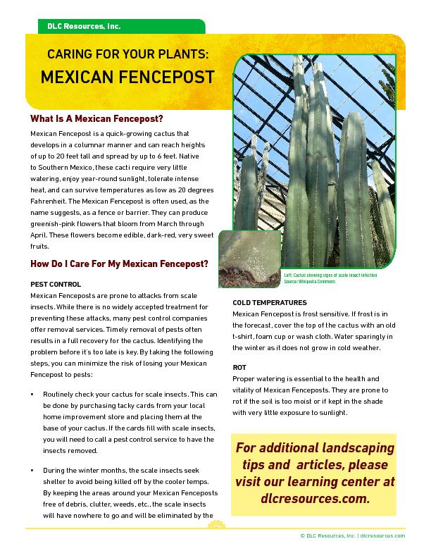 What Is A Mexican Fencepost?