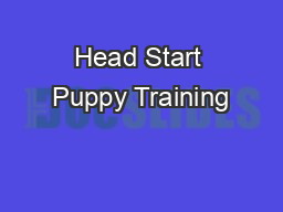 Head Start Puppy Training