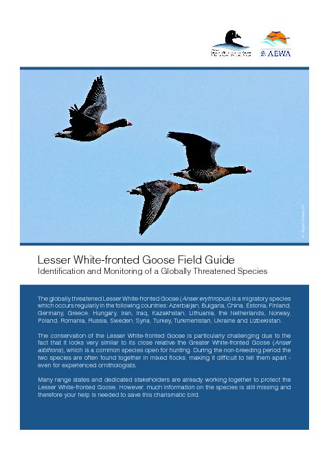The globally threatened Lesser White-fronted Goose (