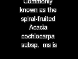 Commonly known as the spiral-fruited Acacia cochlocarpa subsp.  ms is