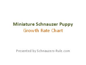 Miniature Schnauzer PuppyGrowth Rate ChartPresented by SchnauzersRule.