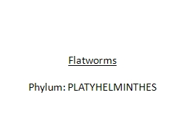 Flatworms PowerPoint PPT Presentation