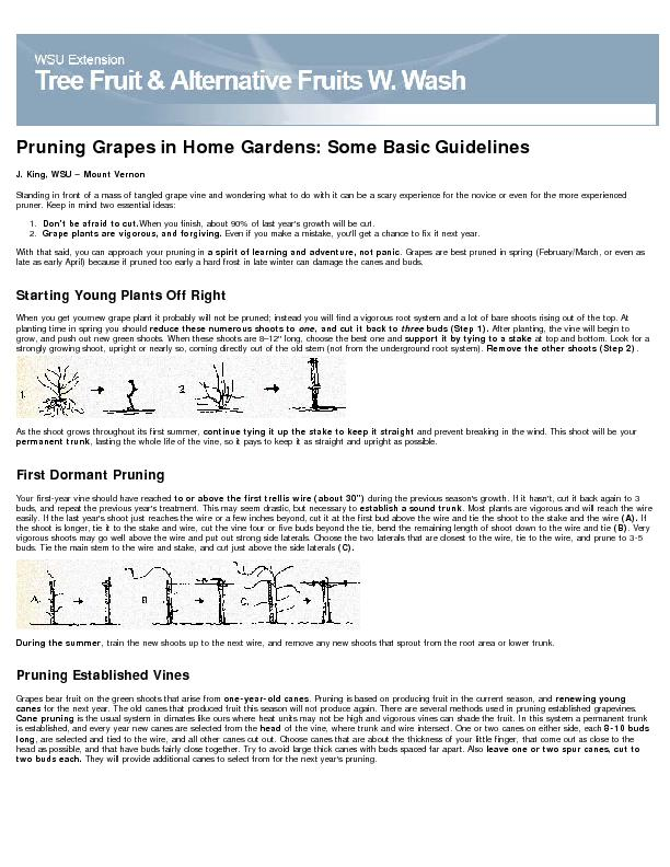The  pruning system is similar to cane pruning, except that the main t PowerPoint PPT Presentation