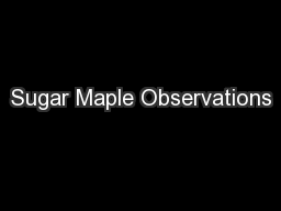 Sugar Maple Observations