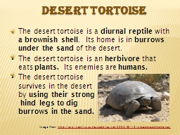 The desert tortoise is a