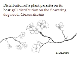 Distribution of a plant parasite on its host: