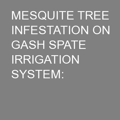 MESQUITE TREE INFESTATION ON GASH SPATE IRRIGATION SYSTEM: