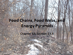 Food Chains, Food Webs, and Energy Pyramids PowerPoint PPT Presentation