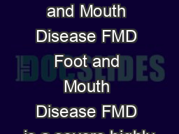 What is Foot and Mouth Disease FMD Foot and Mouth Disease FMD is a severe highly