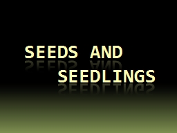 SEEDS AND