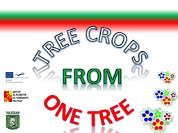 Tree crops PowerPoint PPT Presentation