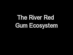 The River Red Gum Ecosystem