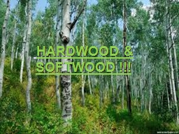 Hardwood & softwood