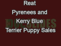Reat Pyrenees and Kerry Blue Terrier Puppy Sales