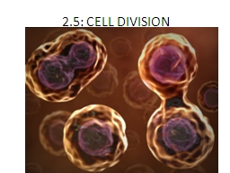 2.5: CELL DIVISION PowerPoint PPT Presentation