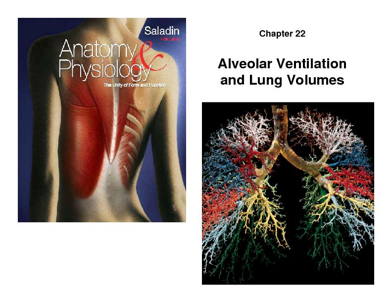 Chapter 22and Lung Volumes