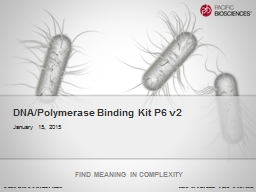 DNA/Polymerase Binding