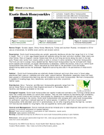 Weed of the Week Produced by the USDA Forest Service Fore st Health Staff Newtown Square PA