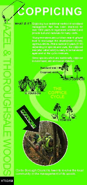 The Coppice  cycle PowerPoint PPT Presentation