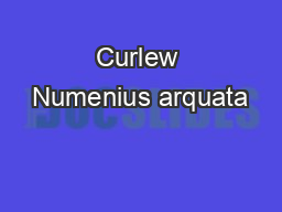 Curlew Numenius arquata PowerPoint PPT Presentation