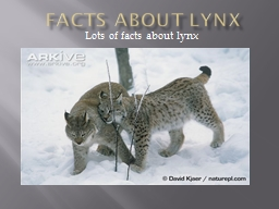 Facts about Lynx PowerPoint PPT Presentation