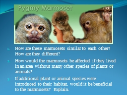 How are these marmosets similar to  each other?  How are th