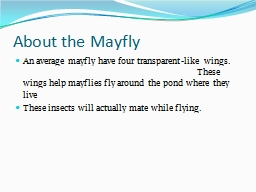 About the Mayfly