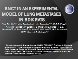 BNCT in an experimental model of lung metastases in BDIX ra