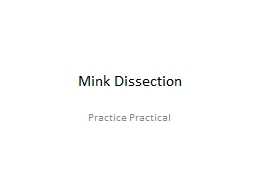 Mink Dissection