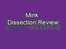 Mink Dissection Review