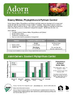 Downy Mildew Phytophthora  Pythium Control Defeat downy mildew Phytophthora and Pythium and fight resistance development for ornamental production wit h the novel mode of action of Adorn Fungicide