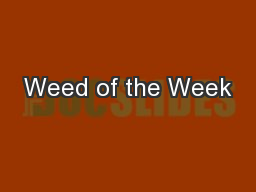Weed of the Week