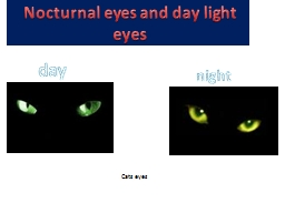 Nocturnal eyes and day light eyes
