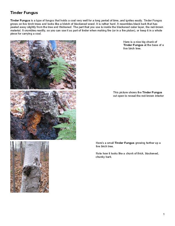 Tinder Fungus is a type of fungus that holds a coal very well for a lo