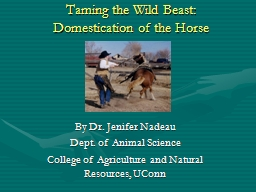 Taming the Wild Beast: Domestication of the Horse