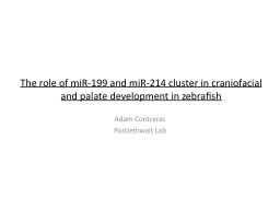 The role of miR-199 and miR-214 cluster in craniofacial and