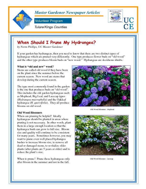 When Should I Prune My Hydrangea?by Norm Phillips, UC Master Gardener