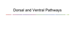 Dorsal and Ventral Pathways PowerPoint PPT Presentation