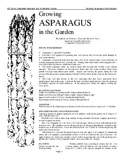 UC Davis Vegetable Research and Information Center Growing Asparagus in the Garden Page Growing ASPARAGUS in the Garden The authors are William L