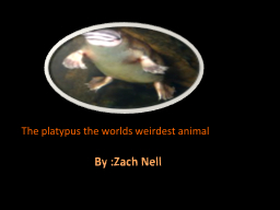 The platypus the worlds weirdest animal PowerPoint PPT Presentation