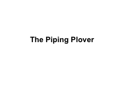 The Piping Plover PowerPoint PPT Presentation