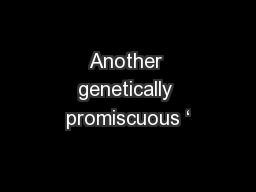 Another genetically promiscuous '