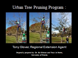 Urban Tree Pruning Program : PowerPoint PPT Presentation
