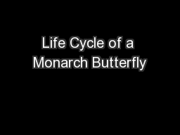 Life Cycle of a Monarch Butterfly PowerPoint PPT Presentation
