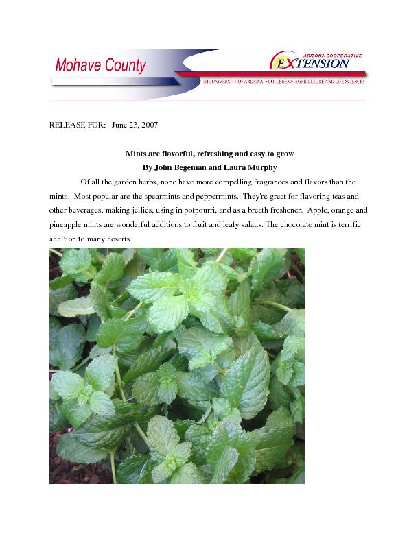 Mints are flavorful, refreshing and easy to grow By John Begeman and L