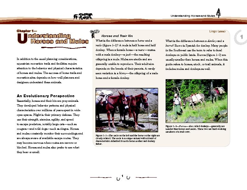 Understanding Horses and Mules
