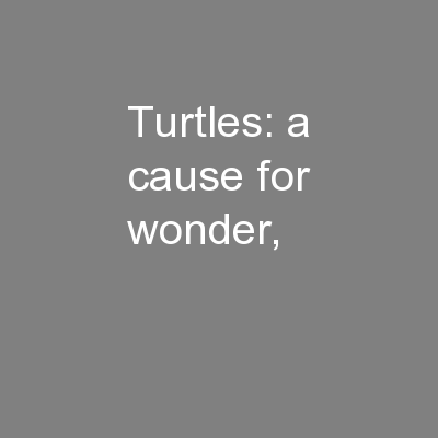 Turtles: a cause for wonder,