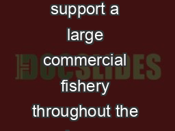 Bigmouth buffalo are a popular foodfish and support a large commercial fishery throughout the lower Mississippi River val ley PowerPoint PPT Presentation
