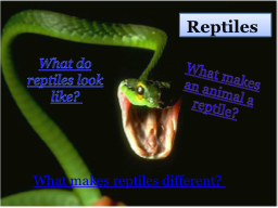 What makes an animal a reptile?
